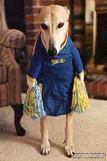 """""""Greyhound"""""""