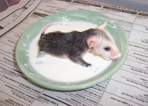 """""""Possum"""""""
