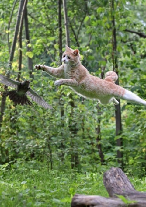 """Cats fly"""