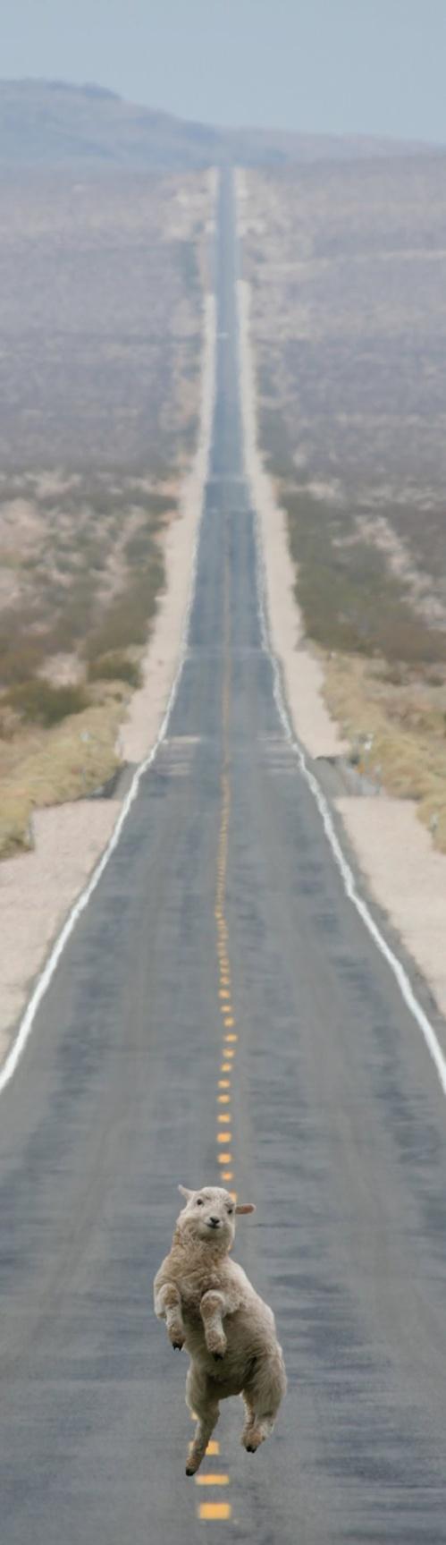 """""""highway"""""""