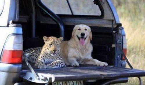 """Leopard dog"""