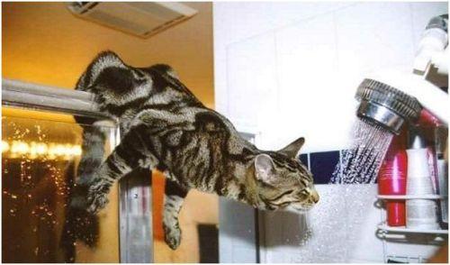 """Cat Shower"""