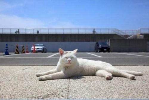 """""""Cat1"""""""