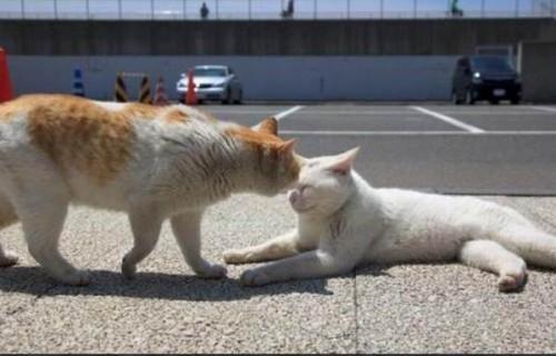 """""""Cat2"""""""
