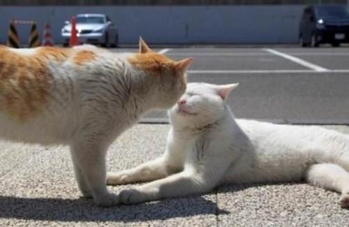 """""""Cat3"""""""