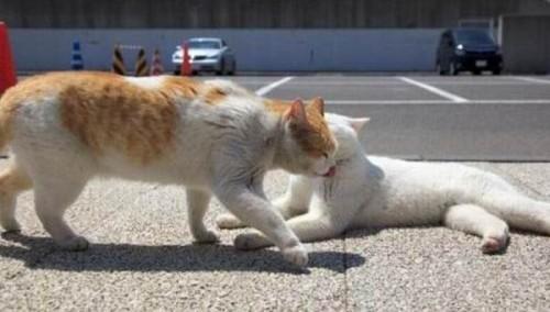 """""""Cat4"""""""