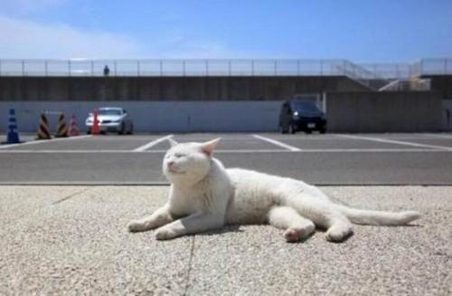 """""""Cat5"""""""