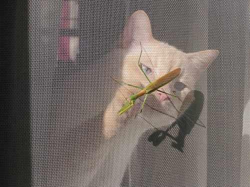 """""""Praying Mantis"""""""