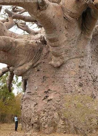 """""""Amazing Tree"""""""