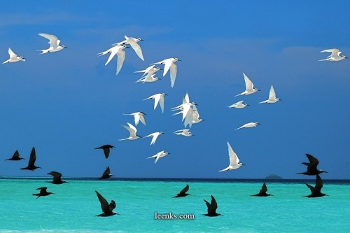 """""""Sea Birds"""""""